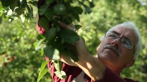 Stefan-picking-fruit-closeup